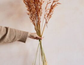 dried wheatgrass rust