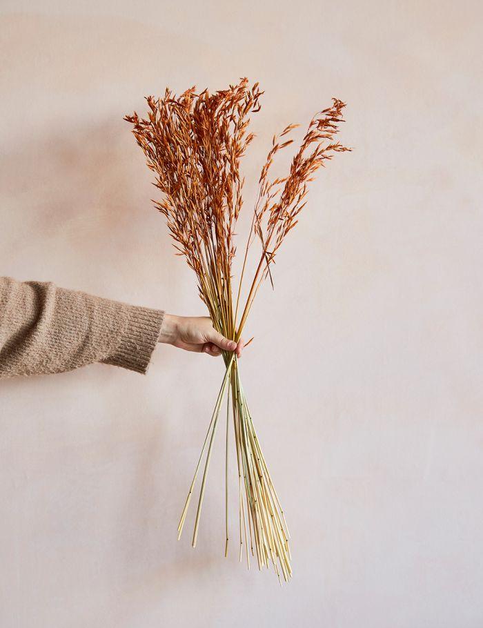 dried wheatgrass rust